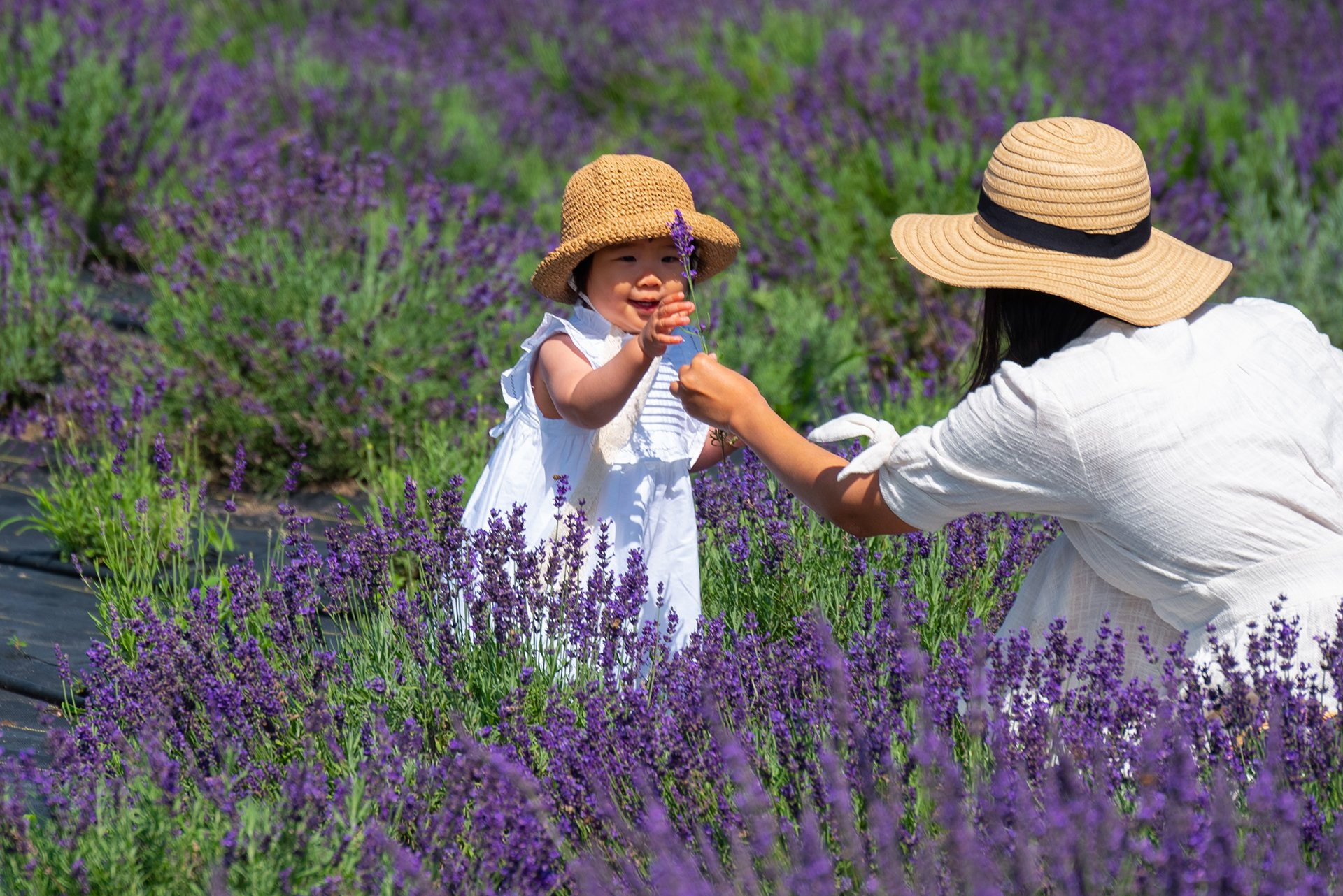 Lavender Mother and Child